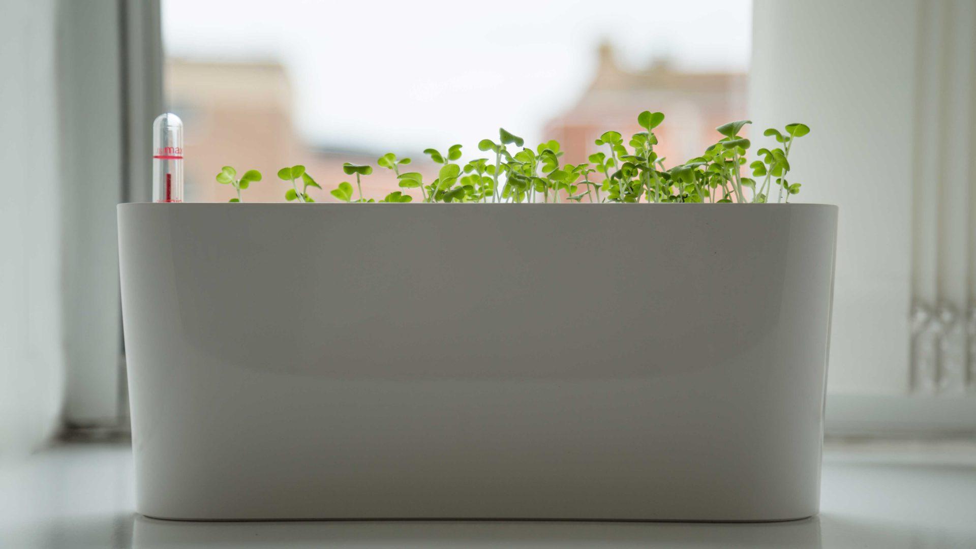 The FXhome herb garden