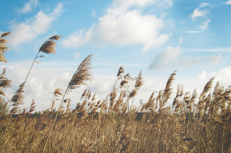 Natural light - the best tool when filmmaking on a budget (wheat field golden hour)