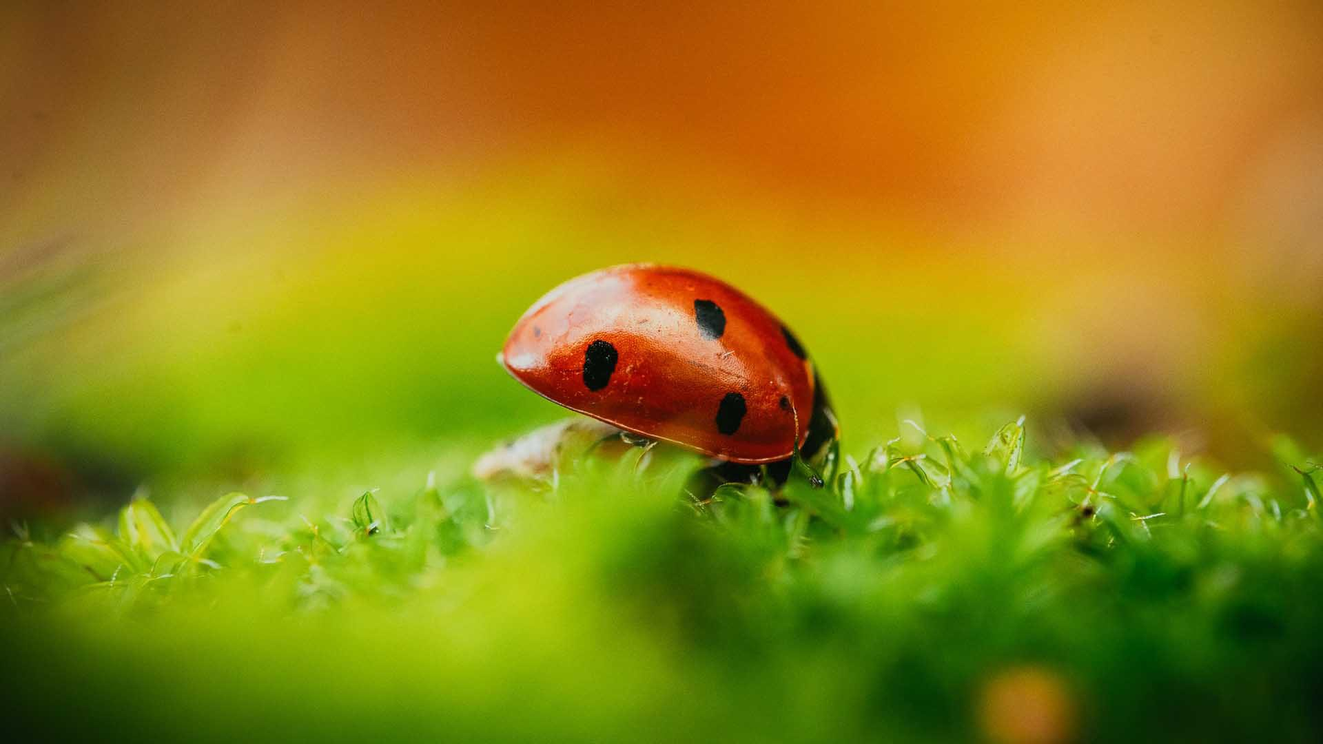 What is depth of field and how can it be used for composition - bokeh obstructing obtrusive details on macro insect photo