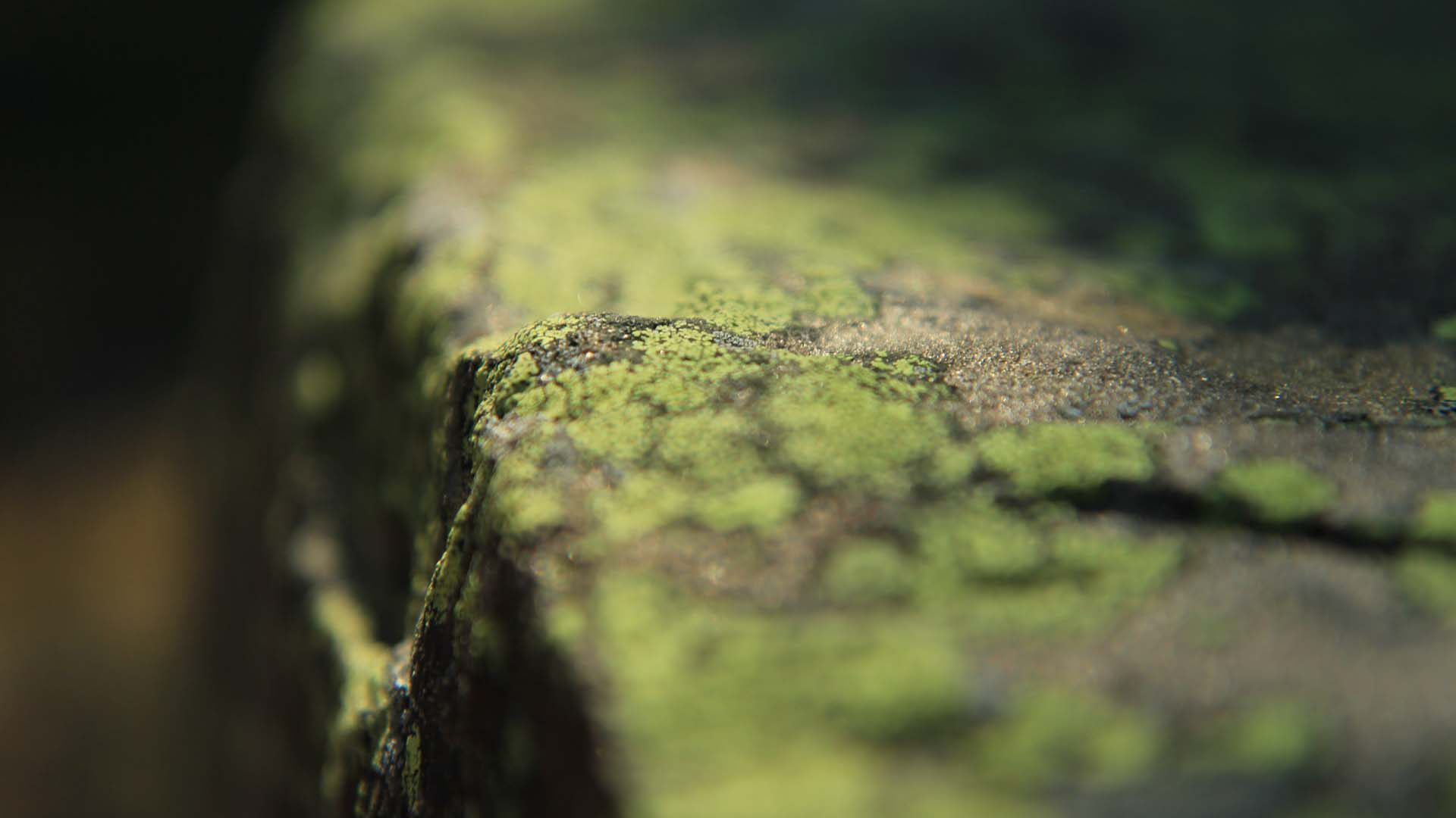 Using depth of field too sparingly slither shallow depth of field lichen on rock